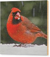 Cardinal In The Snowstorm Wood Print