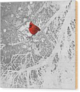 Cardinal In Winter Wood Print by Ellen Henneke