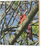 Cardinal  Wood Print by James Hammen