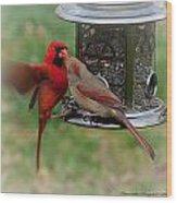 Cardinal Kiss Wood Print