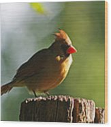 Cardinal Light Wood Print