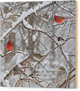 Cardinal Meeting In The Snow Wood Print