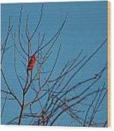 Cardinal Morning Wood Print