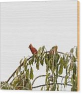 Cardinal On A Branch Wood Print