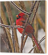 Cardinal On A Winter Day Wood Print