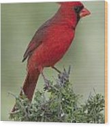Cardinal On Tree Wood Print