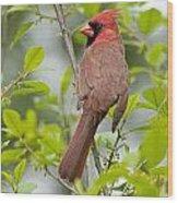 Cardinal Pictures 123 Wood Print