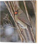 Cardinal Pictures 50 Wood Print