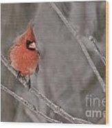 Cardinal Pictures 97 Wood Print