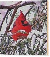 Cardinal Snowbound Wood Print