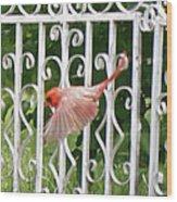 Cardinal Tail Up Landing Wood Print