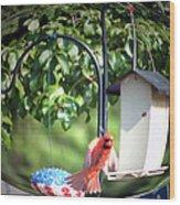 Cardinal Tail Wide Landing Digital Art Wood Print