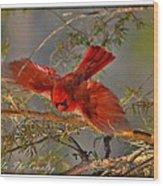 Cardinal Taking Flight Wood Print