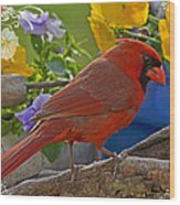 Cardinal With Pansies And Decorations Wood Print