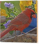 Cardinal With Pansies Wood Print