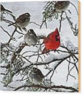 Cardinal With White Throated Sparrows Wood Print