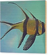 Cardinalfish Wood Print