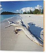 Caribbean Beach With Driftwood Wood Print