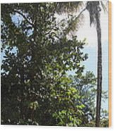 Caribbean Cruise - Dominica - 1212139 Wood Print by DC Photographer