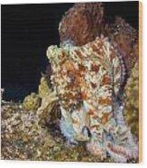 Caribbean Reef Octopus II Wood Print