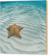Caribbean Sea Star Wood Print