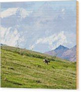 Caribou And Mount Mckinley Wood Print