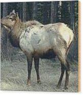 Elk Side Profile - Banff, Alberta Wood Print