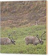 Caribou In The Rain Wood Print