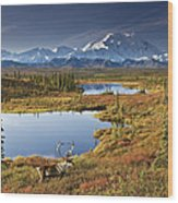 Caribou On Tundra In Denali Wood Print