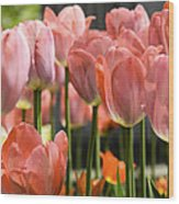 Caring Pink Tulip Time Wood Print