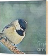 Carlina Chickadee With Soft Blue Bokeh Wood Print