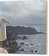 Carlos The Pacific Gull Wood Print
