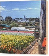 Carlsbad Flower Fields Wood Print