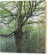 Carly Dromahair Co Sligo Ireland Wood Print