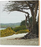 Carmel California Beach Wood Print