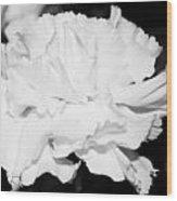 Carnation Against Black Wood Print