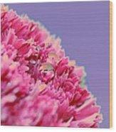 Carnation Wood Print