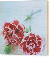Carnations Wood Print by Stephanie Frey