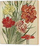 Carnations Wood Print by Philip Ralley