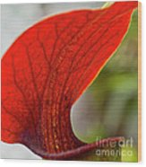 Carnivorous Plants 2 Wood Print
