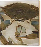 Carolina Blue Crab Wood Print