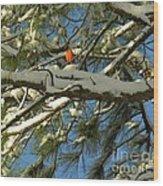 Carolina Cardinal Wood Print