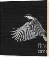 Carolina Chickadee Wood Print