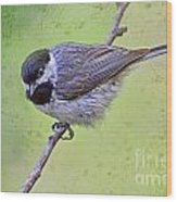 Carolina Chickadee On Angled Perch Wood Print