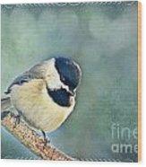 Carolina Chickadee With Decorative Frame II  Wood Print