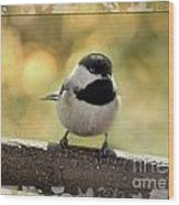 Carolina Chickadee With Decorative Frame IIi Wood Print