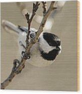 Carolina Chickadees Wood Print