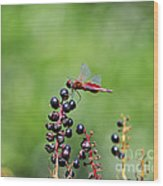 Carolina Saddlebags Wood Print