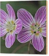 Carolina Spring Beauty Duo Wood Print