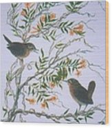 Carolina Wren And Jasmine Wood Print by Ben Kiger